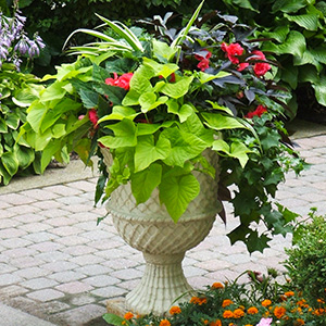 Awesome Accent container garden