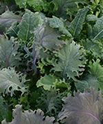 Laitue Simply Salad Kale Storm Mix