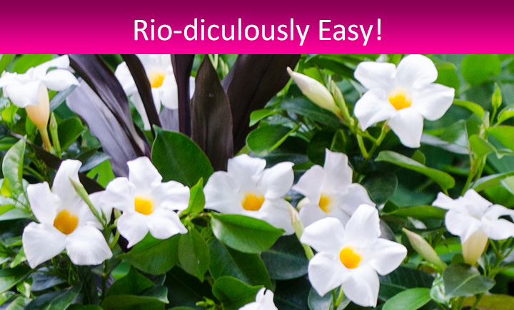 Rio-icuously Easy