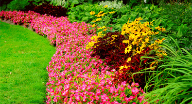 Colourful gardens