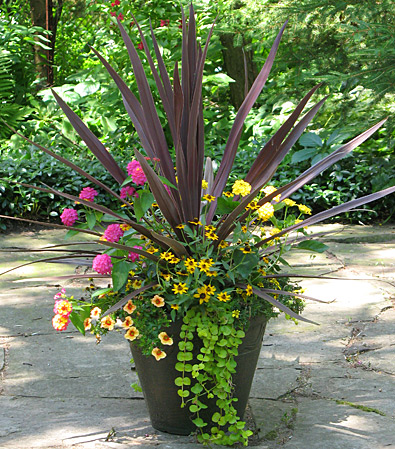 Container Garden Ideas container gardening ideas for shade impatiens coleus creeping jenny at our fairfield home Rio Dipladenias Container Garden Container Garden Container Garden Space