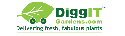 DiggIT Gardens, delivering fresh fabulous plants