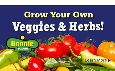 Bonnie Veg, Herbs and Accents - Grow your Own!