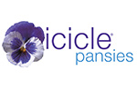 Icicle Pansies