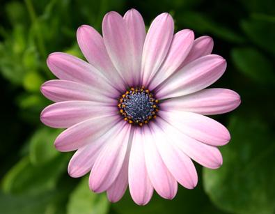 Fernlea Flowers Ltd Flower Blooms