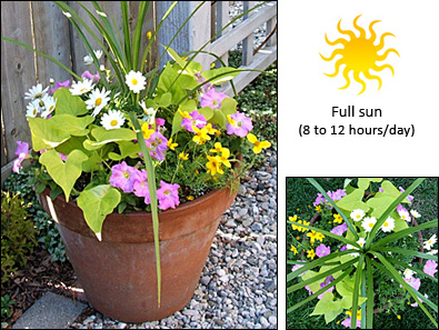 Fernlea flowers ltd container garden recipe 4 - Container gardens for sun ...